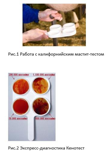 димастин инструкция - фото 4