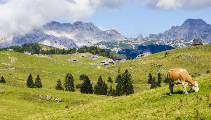 В конце сентября в Швейцарии прошел очередной общенациональный референдум,  на который были вынесены три вопроса. Два из них были посвящены  продовольственной ... 603516b5b14