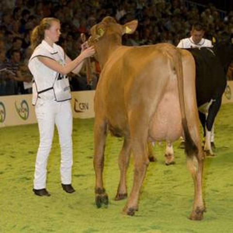 All Holland Dairy Show-2012